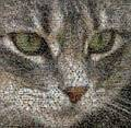 Cat Photo Mosaic.